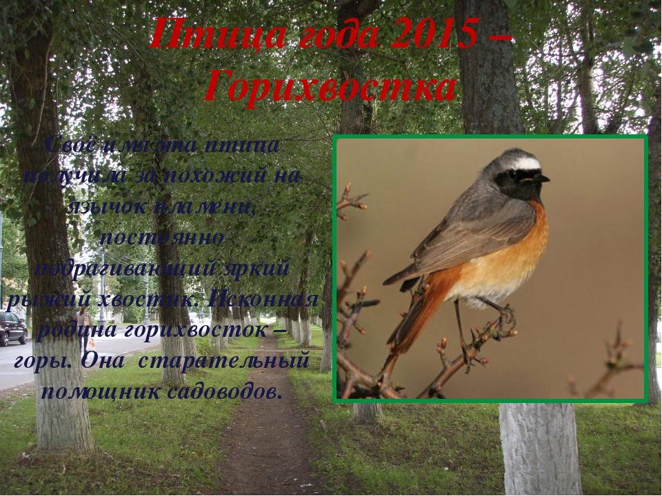 Птица года 2015 – Горихвостка Своё имя эта птица получила за похожий на язычо...