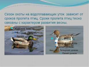 Сезон охоты на водоплавающих уток зависит от сроков пролета птиц. Сроки проле
