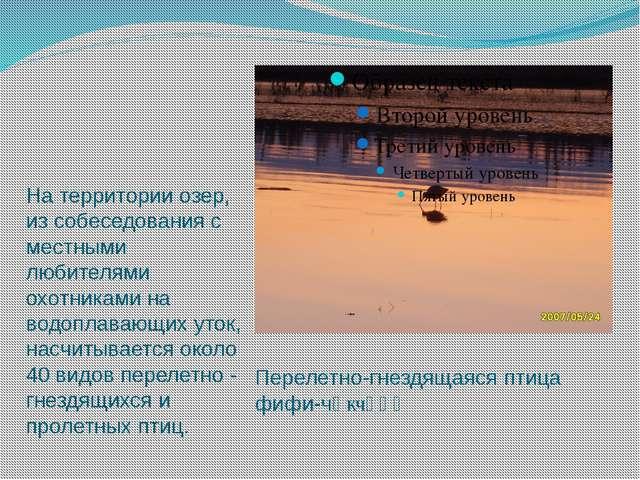 Перелетно-гнездящаяся птица фифи-чөкчөңө На территории озер, из собеседования...
