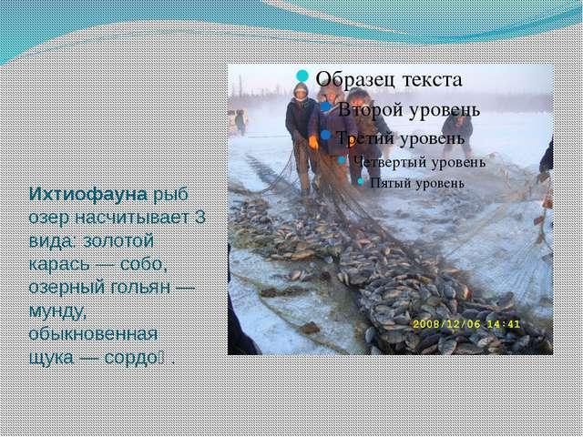 Ихтиофауна рыб озер насчитывает 3 вида: золотой карась — собо, озерный голья...