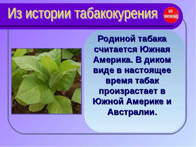 Родиной табака считается Южная Америка. В диком виде в настоящее время табак...
