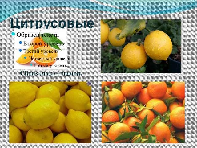 Цитрусовые Citrus (лат.) – лимон.