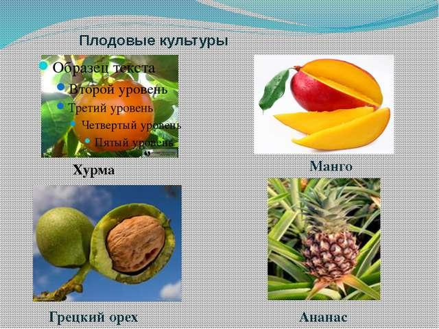 Плодовые культуры Хурма Манго Грецкий орех Ананас