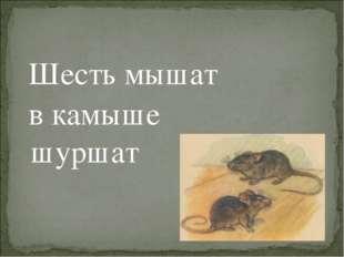 Шесть мышат в камыше шуршат