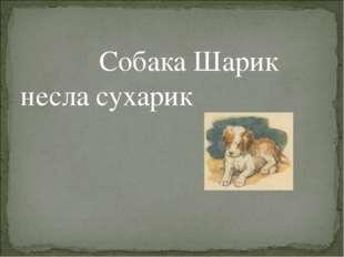 Собака Шарик несла сухарик