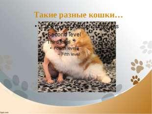 Такие разные кошки…