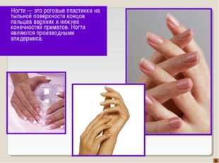 Ногти — это роговые пластинки на тыльной поверхности концов пальцев верхних и