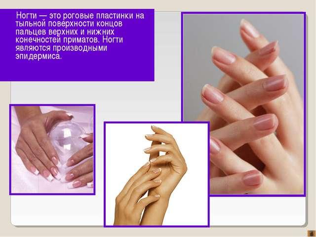 Ногти — это роговые пластинки на тыльной поверхности концов пальцев верхних и...