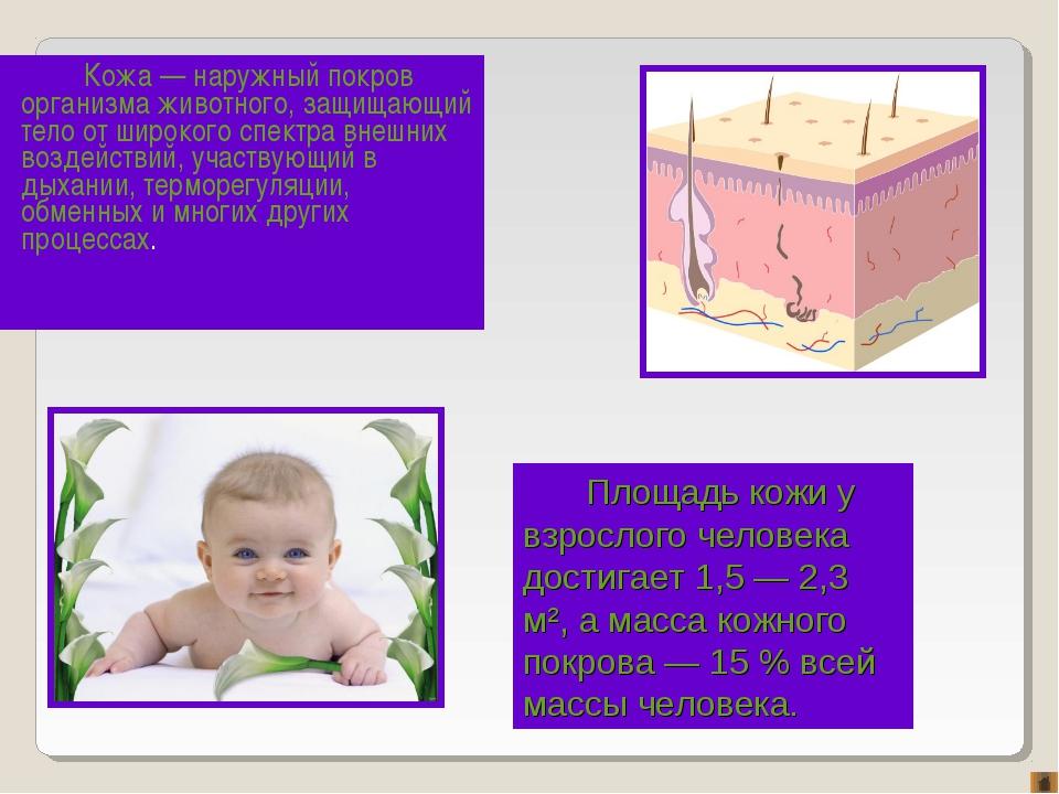 Кожа — наружный покров организма животного, защищающий тело от широкого спект...