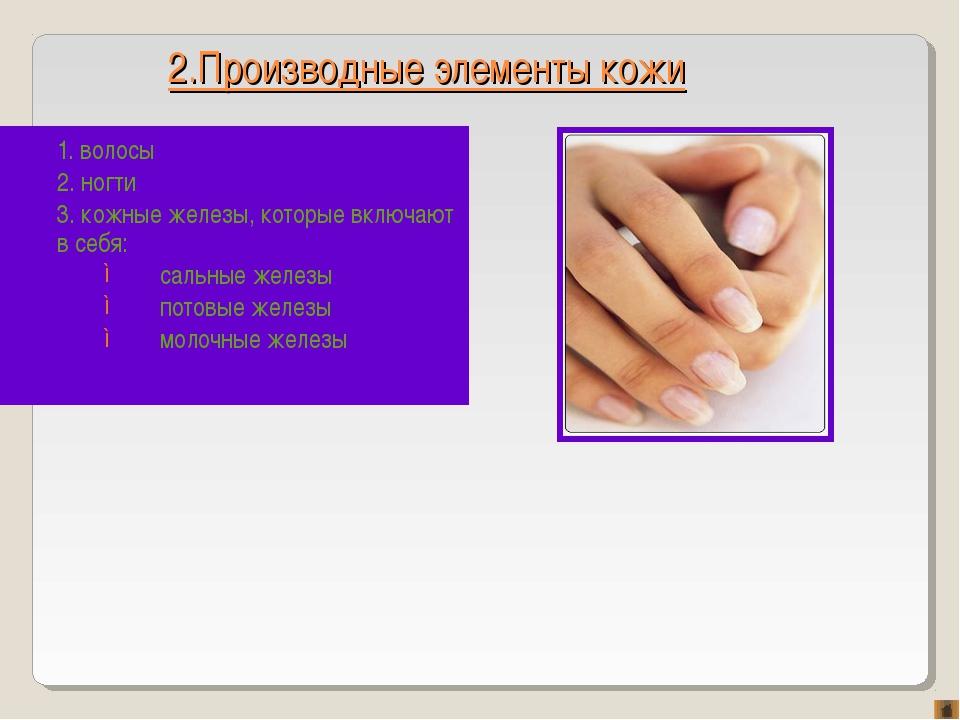 2.Производные элементы кожи 1. волосы 2. ногти 3. кожные железы, которые вклю...
