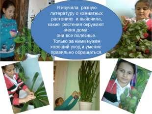 Я изучила разную литературу о комнатных растениях и выяснила, какие растения