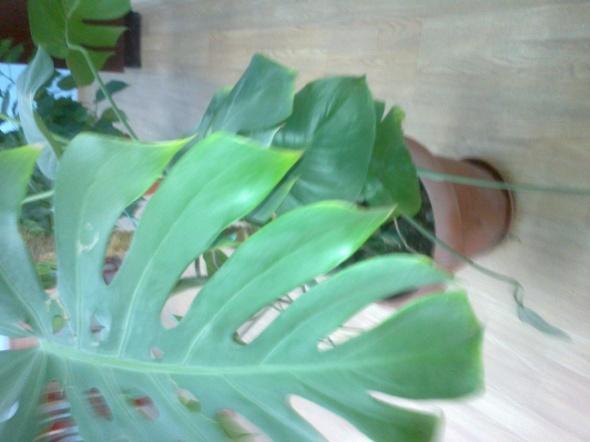 Полезные и вредные комнатные растения