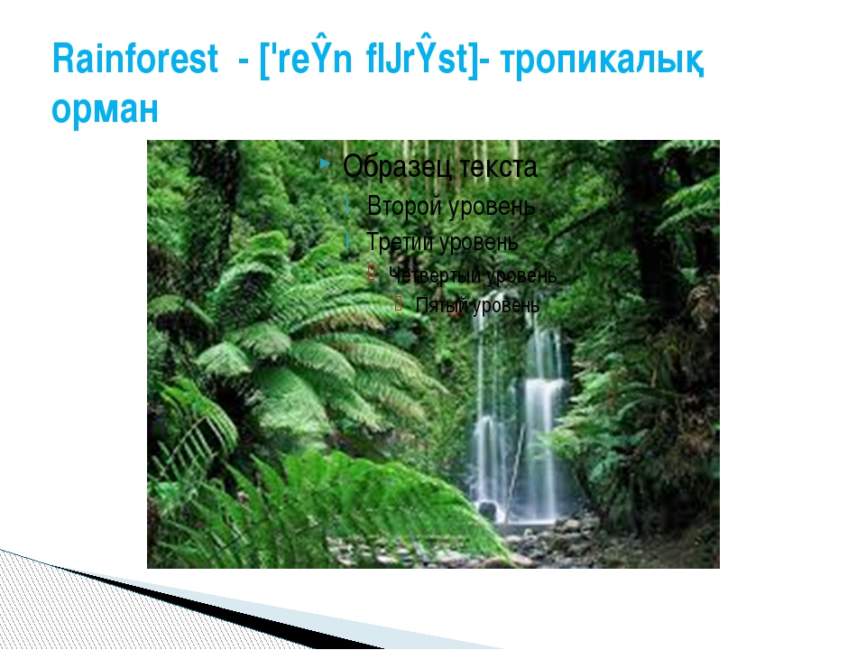 Rainforest - ['reɪnˌfɔrɪst]- тропикалық орман