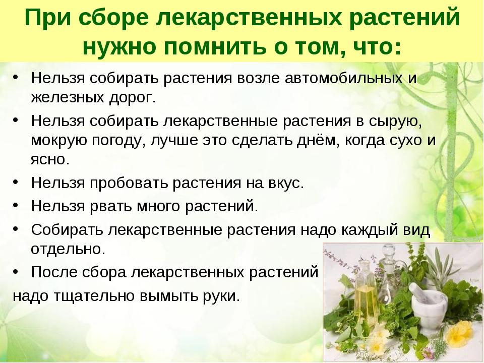 При сборе лекарственных растений нужно помнить о том, что: Нельзя собирать ра...