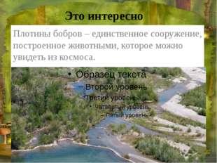 Это интересно Плотины бобров – единственное сооружение, построенное животными