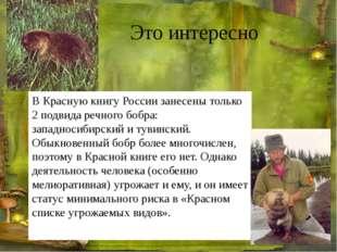 Это интересно В Красную книгу России занесены только 2 подвида речного бобра