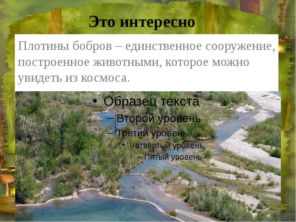 Это интересно Плотины бобров – единственное сооружение, построенное животными...