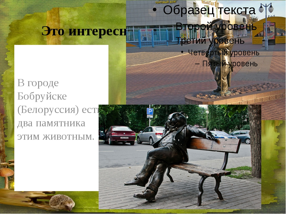 Это интересно В городе Бобруйске (Белоруссия) есть два памятника этим животным.