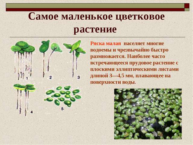 Роль растений водоемов: кормом для многих обитателей вод, их заросли создают убежища