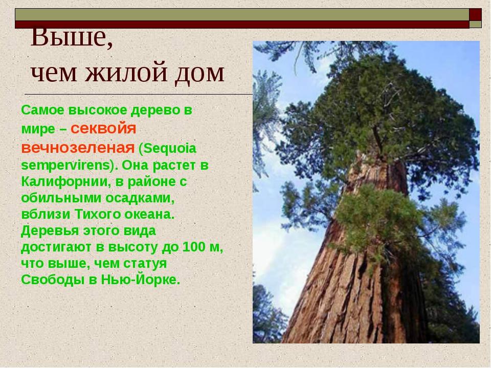 Выше, чем жилой дом Самое высокое дерево в мире – секвойя вечнозеленая (Sequo...