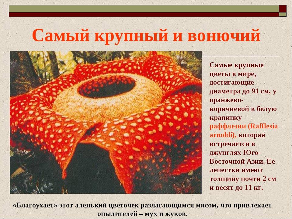 Цветы всего мира и описание