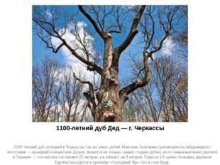 1100-летний дуб Дед — г. Черкассы 1100-летний дуб, который в Черкассах так же