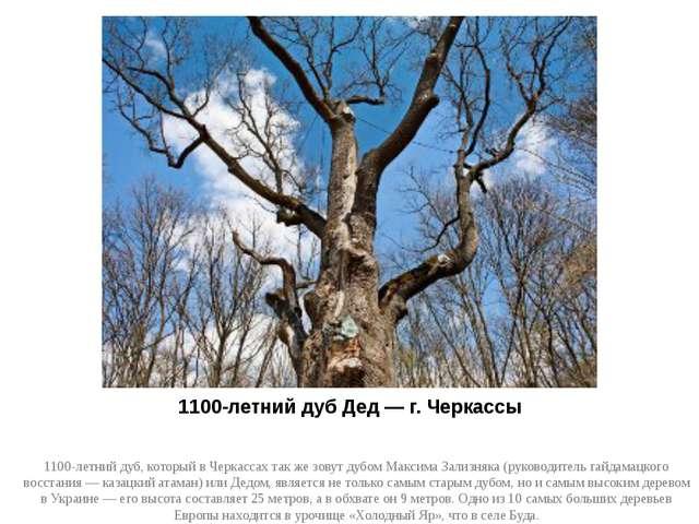 1100-летний дуб Дед — г. Черкассы 1100-летний дуб, который в Черкассах так же...
