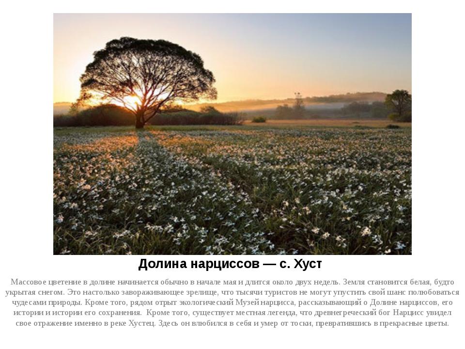 Долина нарциссов — с. Хуст Массовое цветение в долине начинается обычно в нач...