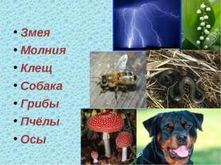 Змея Молния Клещ Собака Грибы Пчёлы Осы