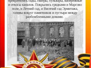 Весной 1942 года весь блокадный Ленинград принялся выращивать овощи. В огород