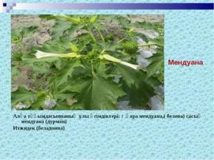 Алқа тұқымдасыннаның улы өсімдіктері: : қара мендуана,( белена) сасық мендуан