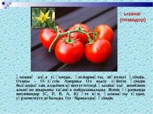 Қызанақ алқа тұқымдас, қосжарнақты, шөптекті өсімдік. Отаны – Оңтүстік Амери