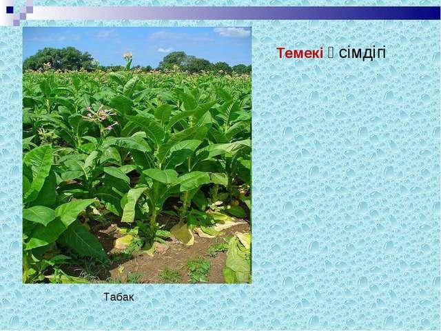 Темекі өсімдігі Табак