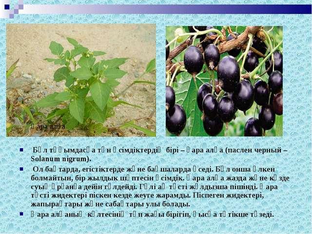 Бұл тұқымдасқа тән өсiмдiктердiң бiрi – қара алқа (паслен черный – Solanum n...