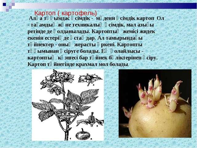 Алқа тұқымдас өсімдік - мәдени өсімдік картоп Ол - тағамдық және техникалық...