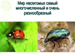 Мир насекомых самый многочисленный и очень разнообразный