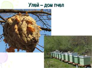 Улей – дом пчел