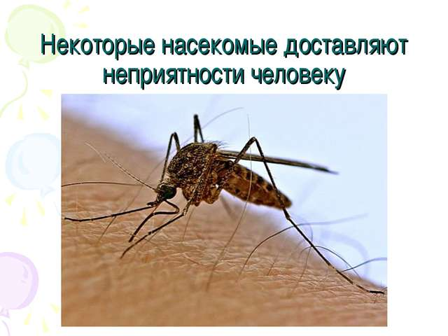 Некоторые насекомые доставляют неприятности человеку