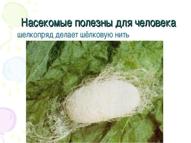 Насекомые полезны для человека шелкопряд делает шёлковую нить