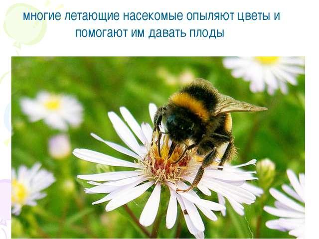 многие летающие насекомые опыляют цветы и помогают им давать плоды