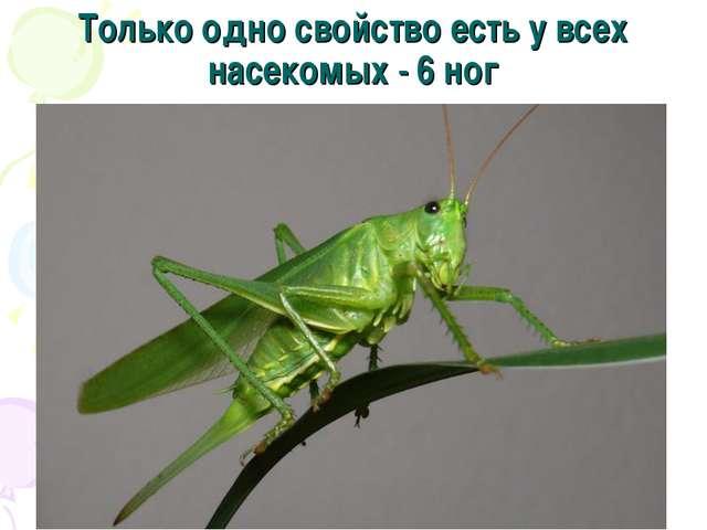 Только одно свойство есть у всех насекомых - 6 ног