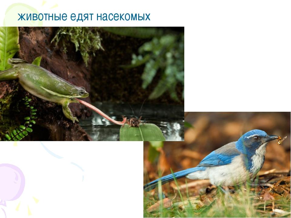 животные едят насекомых