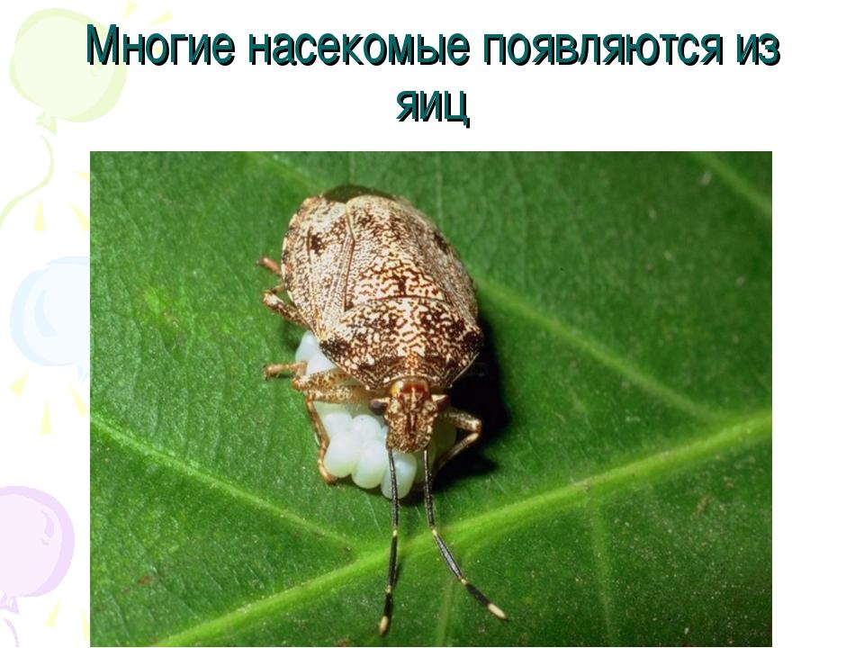 Многие насекомые появляются из яиц