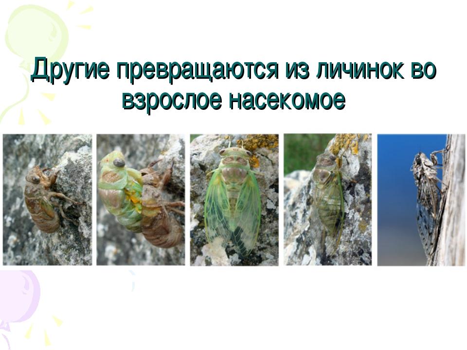 Другие превращаются из личинок во взрослое насекомое
