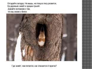 Отгадайте загадку: Не мышь, не птица в лесу резвится, На деревьях живёт и оре