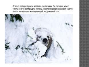 Опасно, если разбудить медведя среди зимы. Он потом не может уснуть и начинае