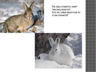 Как заяц готовится к зиме? Чем заяц питается? Есть ли у зайца враги и как он