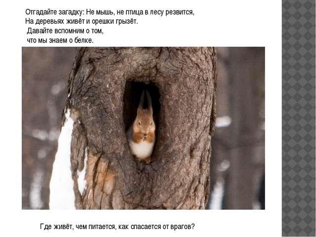 Отгадайте загадку: Не мышь, не птица в лесу резвится, На деревьях живёт и оре...