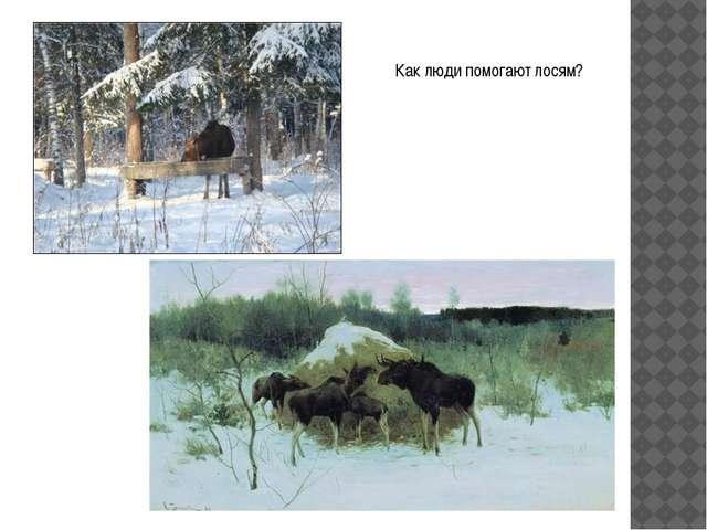 Как люди помогают лосям?
