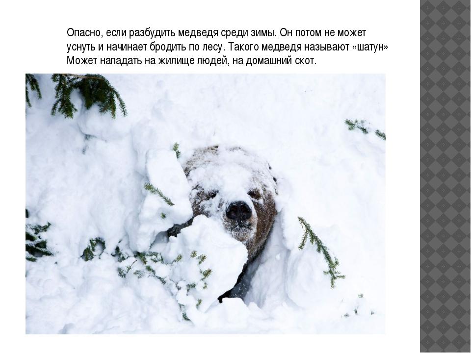 Опасно, если разбудить медведя среди зимы. Он потом не может уснуть и начинае...